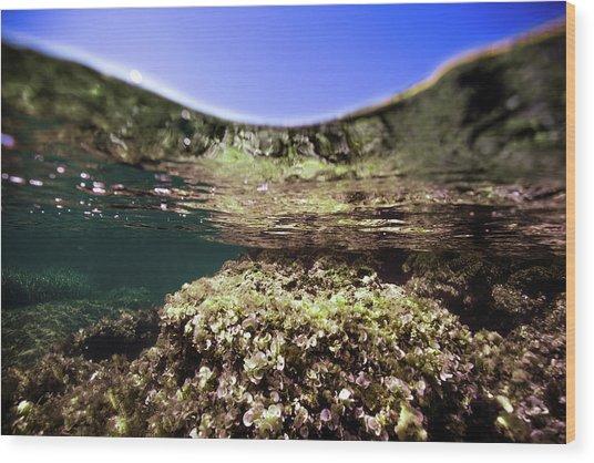 Coral Beauty Wood Print