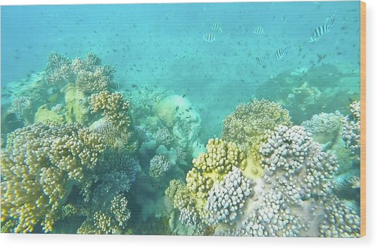 Wood Print featuring the photograph Coral by Debbie Cundy