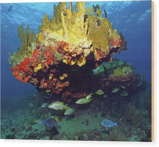 Coral Reef Scene, Calf Rock, Virgin Islands Wood Print