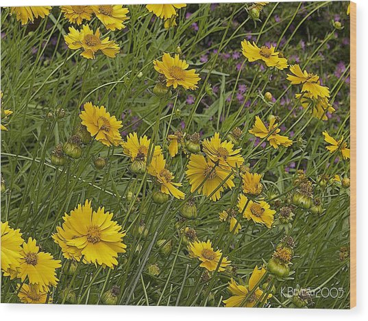Coreopsis And Mexican Heather Wood Print