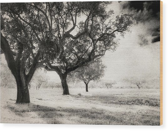 Cork Trees Wood Print