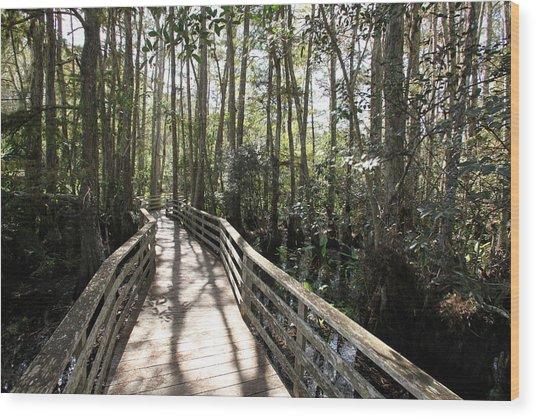 Corkscrew Swamp 697 Wood Print
