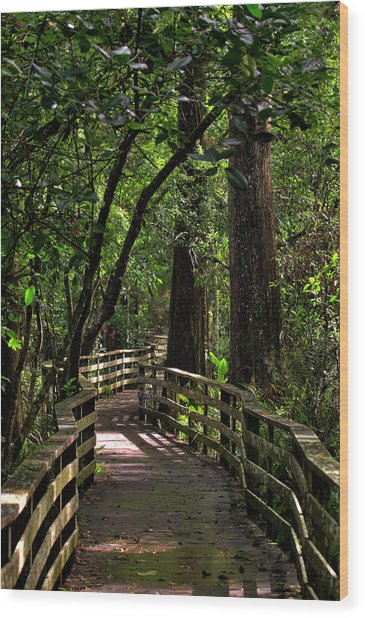 Corkscrew Swamp Wood Print