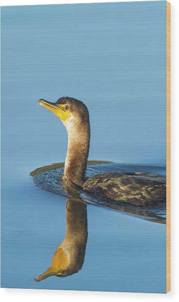 Cormorant Reflection Wood Print