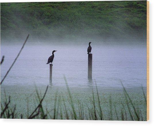 Cormorants Wood Print