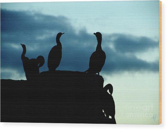 Cormorants In Silhouette Wood Print