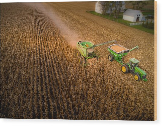 Corn Dust Wood Print