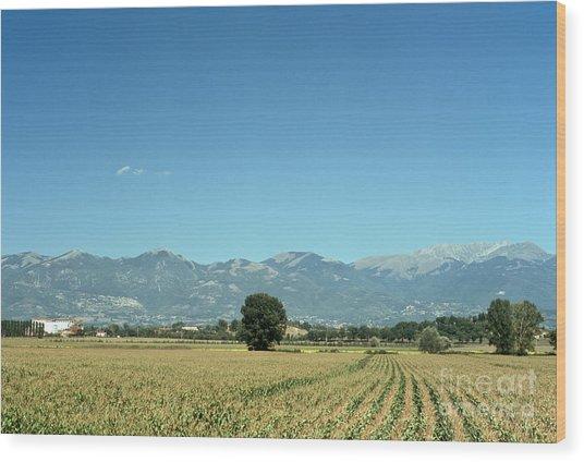 Corn Field With Terminillo II Wood Print