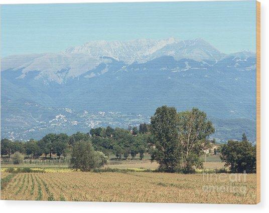 Corn Field With Terminillo IIi Wood Print