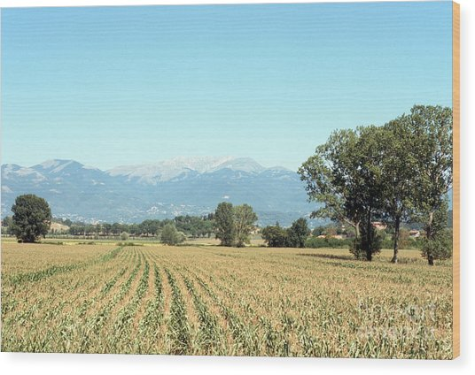 Corn Field With Terminillo Mount Wood Print