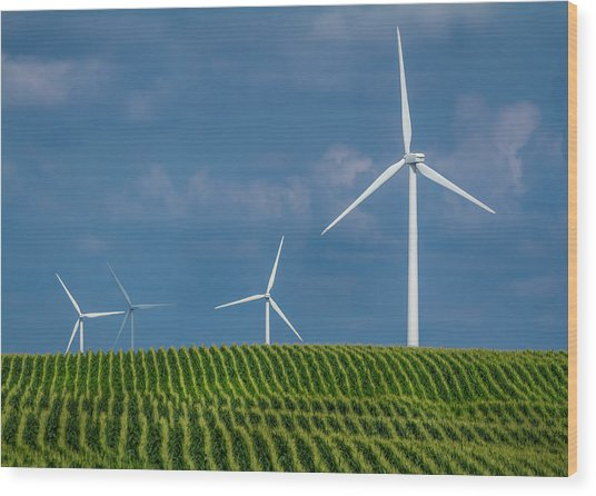 Corn Rows And Windmills Wood Print