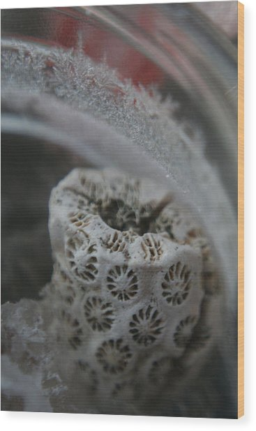 Cornered Coral Wood Print