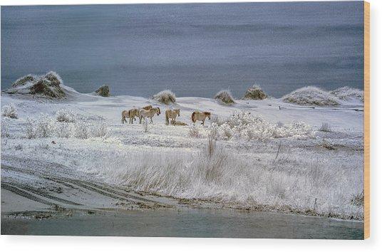Corrola Wild Horses Wood Print