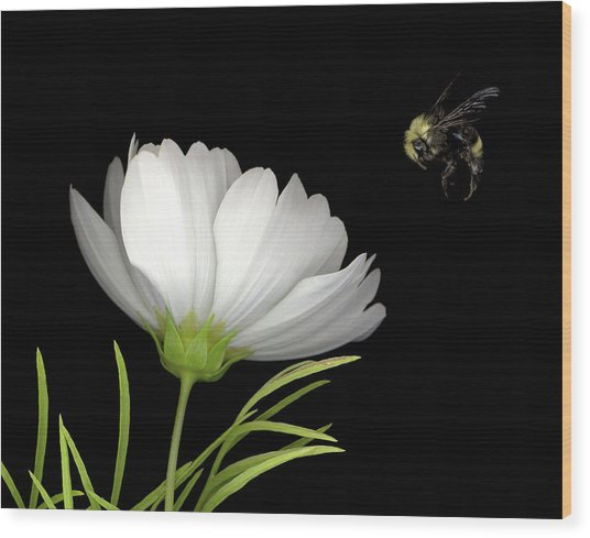 Cosmo And Bee Wood Print by Sandi F Hutchins