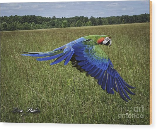 Cosmo In Flight Wood Print