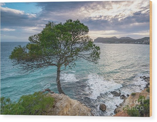 Costa De La Calma Tree Wood Print