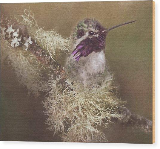 Costas Hummingbird Painted Wood Print