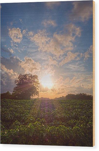 Cotton Field Sunset Wood Print
