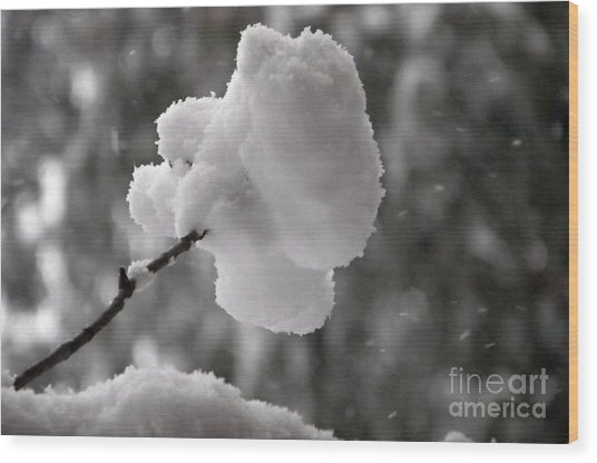 Cotton Snow Wood Print