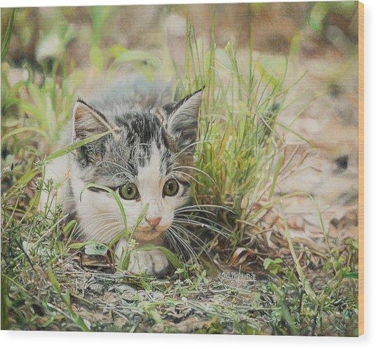 Cotton The Kitten Wood Print