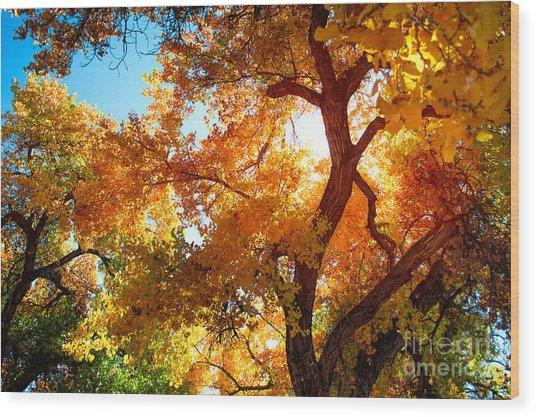 Cottonwood Glow Wood Print