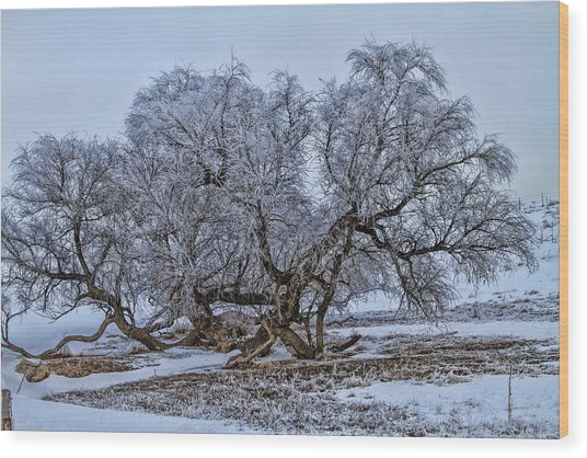 Cottonwood Sprawl Wood Print