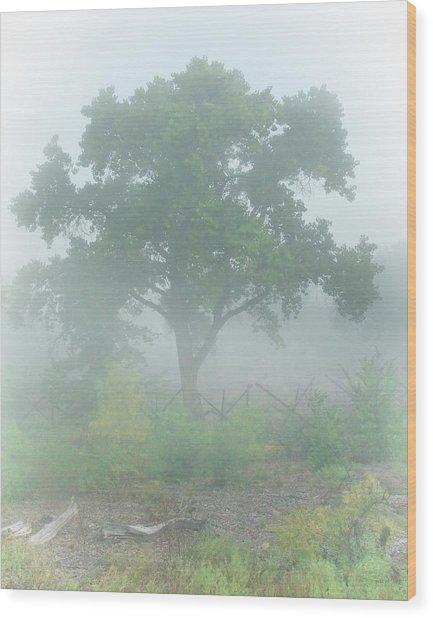 Cottonwood Tree In Fog Wood Print