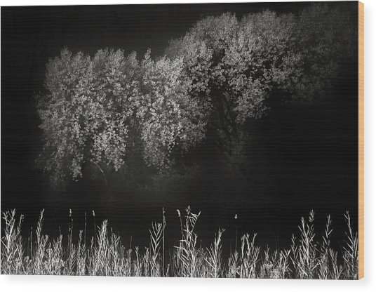 Cottonwoods And Grasses Wood Print by Joseph Smith