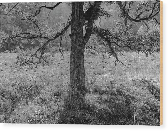 Coulee Oak Wood Print
