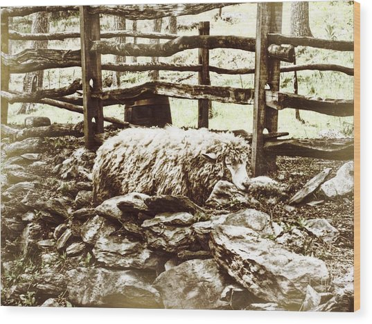 Counting Sheep Wood Print by JAMART Photography