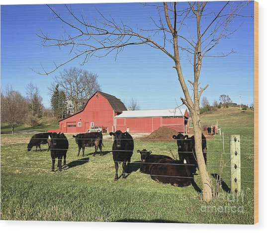 Country Cows Wood Print