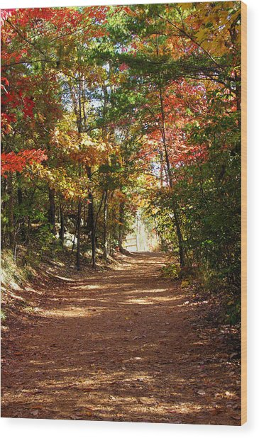 Country Path Wood Print by Ralph  Perdomo