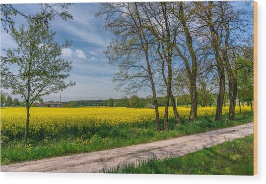 Country Road In The Rapeseed Field Wood Print