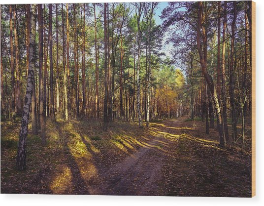 Country Road Through The Forest Wood Print