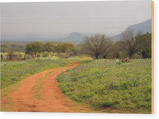 Country Road With Wild Flowers Wood Print