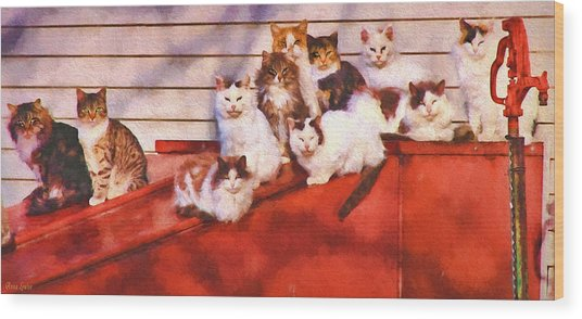 Countryside Cats Wood Print