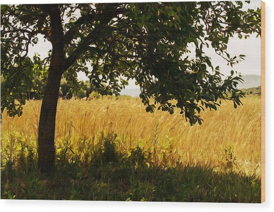 Countryside Of Italy  Wood Print by Andrea Mazzocchetti