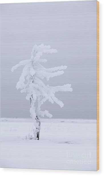 Covered In Frost Wood Print by Tim Grams