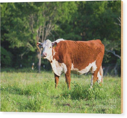 Cow #1 Wood Print