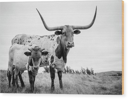Cow And Calf In The Pasture Wood Print