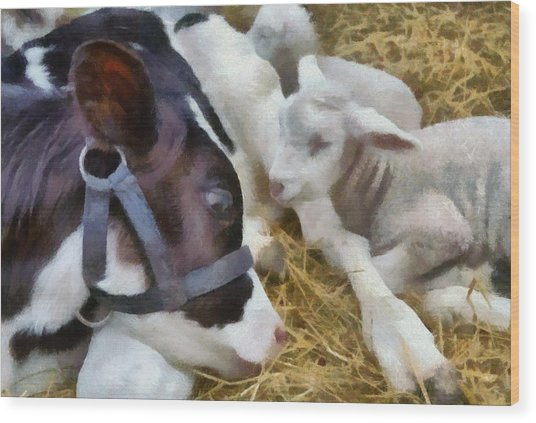 Cow And Lambs Wood Print