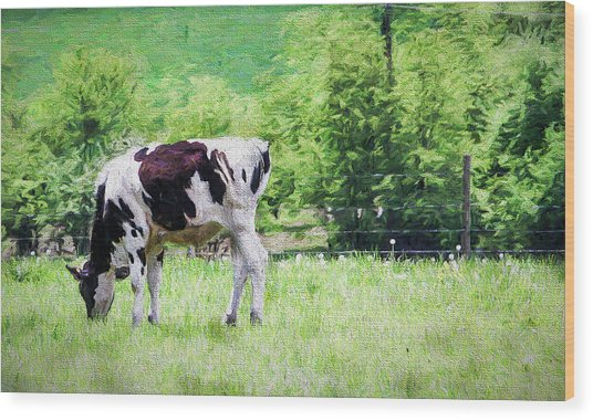 Cow Grazing Wood Print