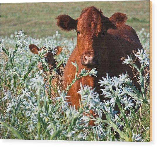 Cow Hide Wood Print