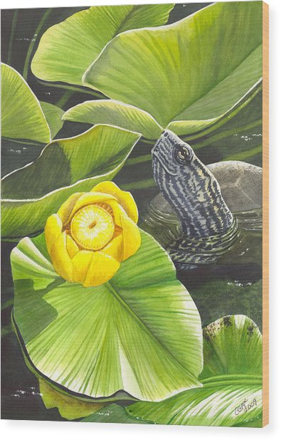 Cow Lily Wood Print by Catherine G McElroy