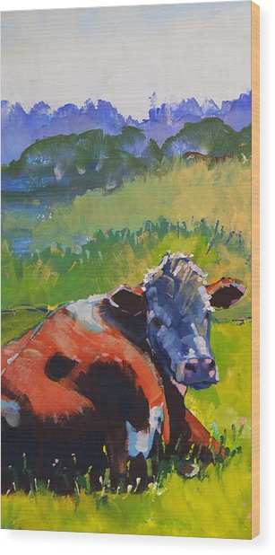 Cow Lying Down On A Sunny Day Wood Print