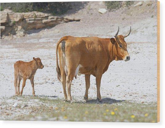 Cows Wood Print by Elisa Locci