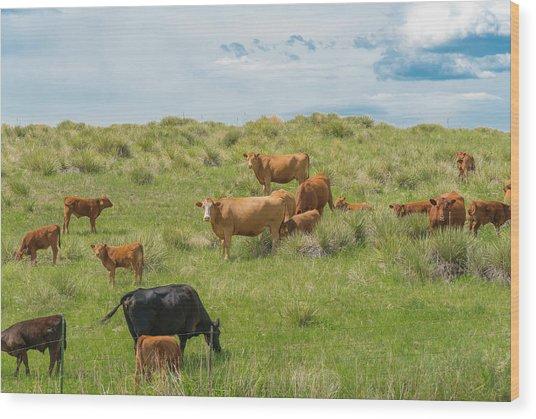 Cows In Field 3 Wood Print