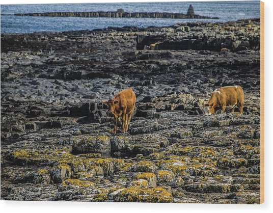 Cows On The Rocks Wood Print