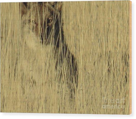 Coyote 3 Wood Print