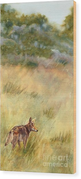 Coyote Santa Rosa Plateau Wood Print